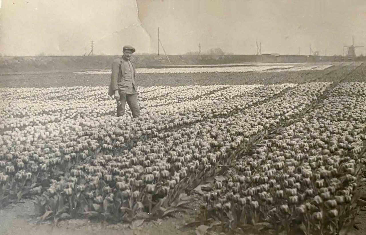 Jan de Groot Tulip Grower